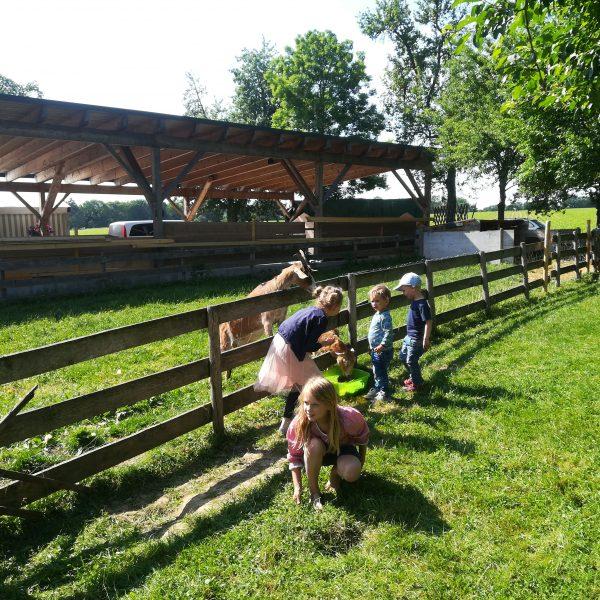 Unsere Ziegen lassen sich gerne streicheln